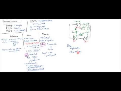 Pancreatic Hormones (Insulin, Glucagon, Somatostatin)