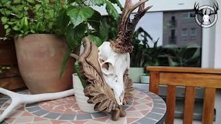 Kozioł obsadzanie trofeum na desce