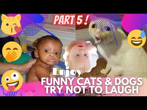 🤣 It's TIME for SUPER LAUGH! 🤣FUNNY CATS & DOGS🙀🐶BEST FUNNY MOMENTS PART 5 🤪 | TRY NOT TO LAUGH 🤭