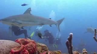 Immersione Con Gli Squali A Roatan, Honduras...by Pigi (Novembre 2007)