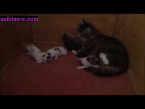 Stray Mommy Cat Carries Her Stray Kitten Back to Family That Adopted Her