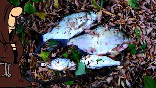 ЕСТЬ НАЛИМ И ЕСТЬ ЛЕЩИ КРУПНАЯ ПЛОТВА Рыбалка в Октябре на реке Сок на донки с берега