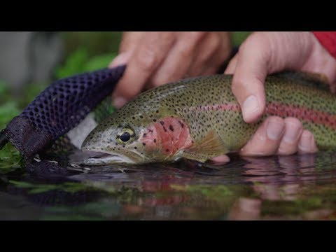 """""""Every River Has a Story"""" - Season 2 - Episode 5 - Scientific Anglers Fly Fusion TV Web Series"""