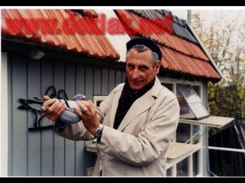 Przemyslaw Kulbacki gołebie Janssen De Klak 613 (Niemcy Hagen) najlepsze DeKlak + dokumentacja !
