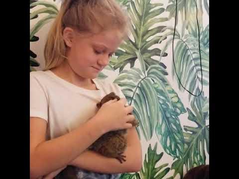 Exotic Animals Bush Babies At Janda Exotics Animal Ranch Youtube