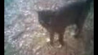 USA Ambassador Roland Arnall Stole this CAT'S home!