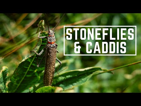 Dry Fly Fishing Stoneflies & Caddis