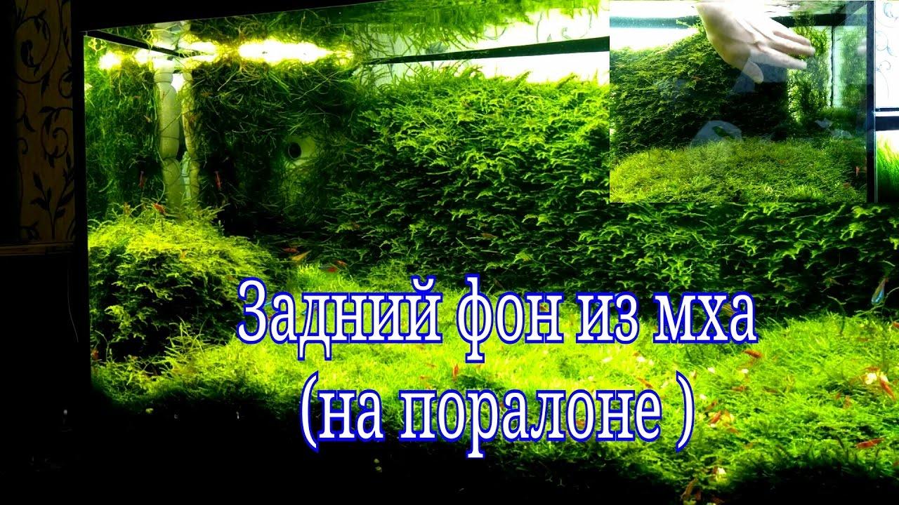 Стенка из мха в аквариуме на паралоне / Moss