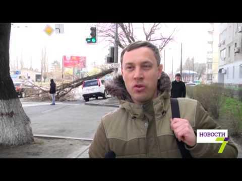 В Одессе дерево упало на машину. Затруднено движение