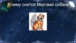 К чему снится Мертвая собака (Сонник)