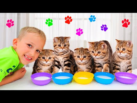 Vlad Dan Niki Bermain Dengan Anak Kucing