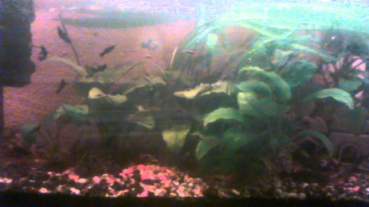 Swasser aquarium fische great wasser tier leben kalt for Aquarium fische im gartenteich