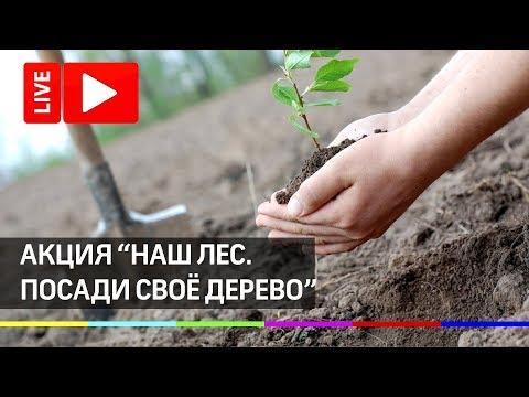 Акции «Наш лес. Посади своё дерево». Прямая трансляция