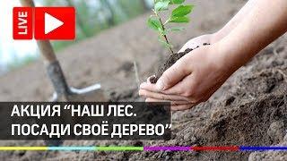 Скачать Акции Наш лес Посади своё дерево Прямая трансляция