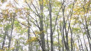 上山高原 秋のエコフェスタ(兵庫県・新温泉町)