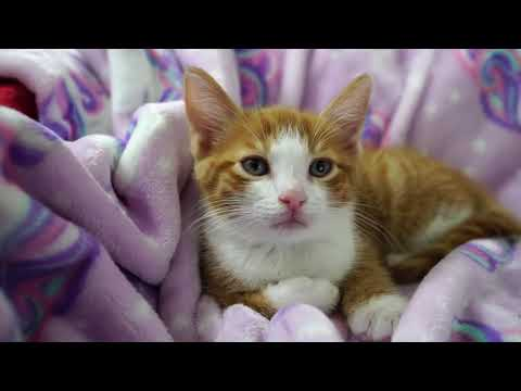 Kittens Vs. Tech Round 3!  2021-01-01