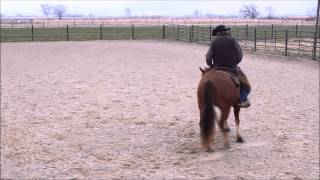 Ranch Sorting Fundamentals - Reins - Training Drill 1