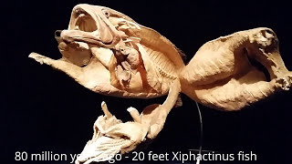 15 largest meanest sea monsters fun scary evolution history from 500 million bc till now