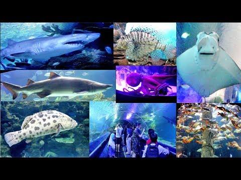 Aquaria KLCC, A World-class Aquarium That Showcases Marine Life  From Malaysia And Around The World.