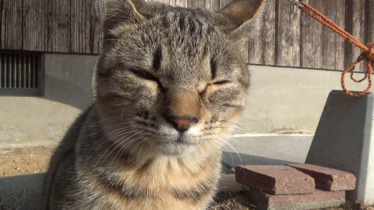 アレしている時以外なかなか止まらん子猫
