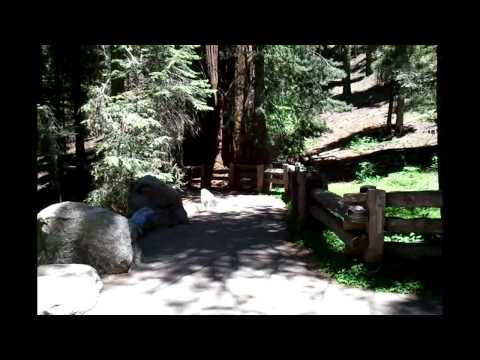 Sequoia National Forest Visit - Giant Redwoods - Part 1 - July 5, 2012