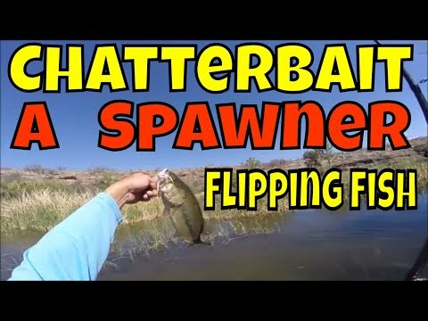 Lake Patagonia Bass Fishing Nogales Arizona