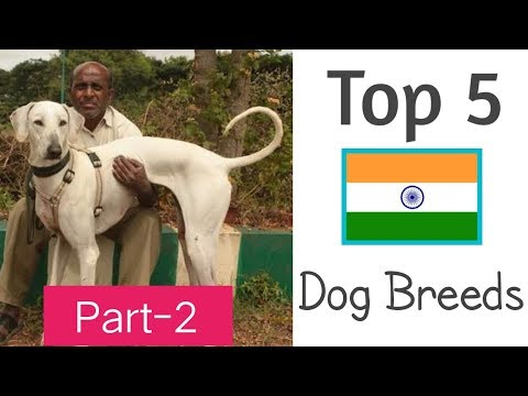 Top 5 Great Indian Dog Breeds | #BestBreedsFromIndia | Part-2