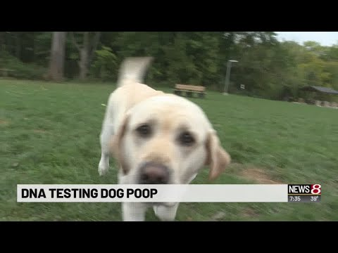 Dog poo DNA testing spreads to downtown apartments