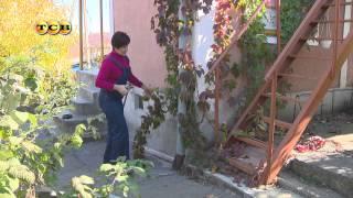 видео Девичий виноград в ландшафтном дизайне (22 фото)