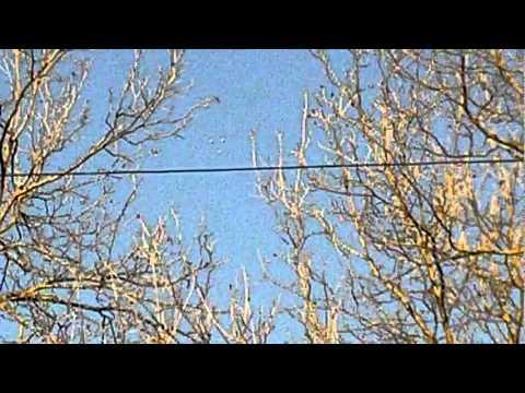 6 UFOs Flying Over Shreveport, LA