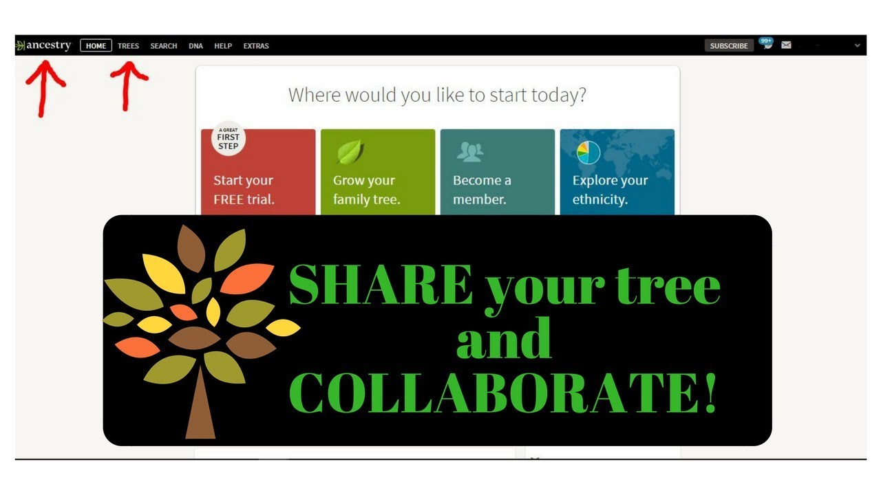 ancestry com manage family tree sharing collaborate guest