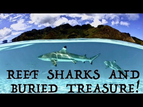 Shark Encounter! British Virgin Islands Bareboat Charter