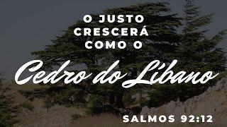 O JUSTO CRESCERÁ COMO O CEDRO DO LÍBANO | REV. AMAURI OLIVEIRA | SALMOS 92:12b