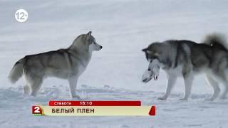 """""""Белый плен"""" — приключенческий фильм"""