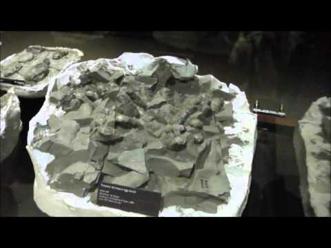 Troodon Formosus Egg Clutch, Museum of the Rockies, Bozeman, Montana