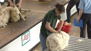 Trin Gwlân Agored Rhag 4 | Wool Handling Open Pre 4