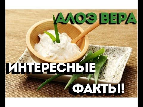 Алоэ Вера - Интересные факты!