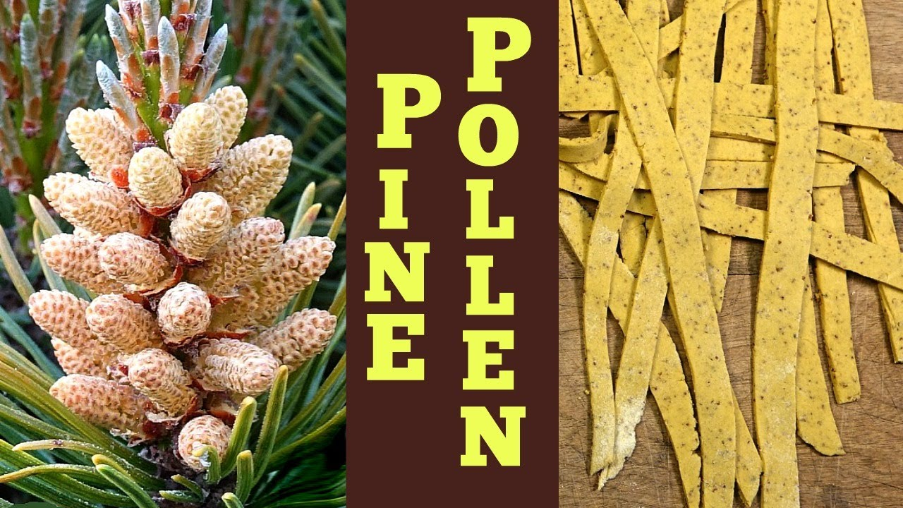 Pine Pollen Recipes: Homestyle Pasta That's So Easy and Tasty!