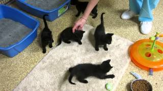 New black kittens at FLOC