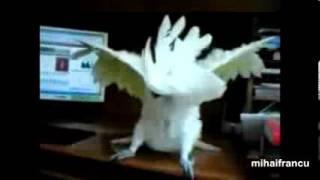 Попугаи с чувством ритма