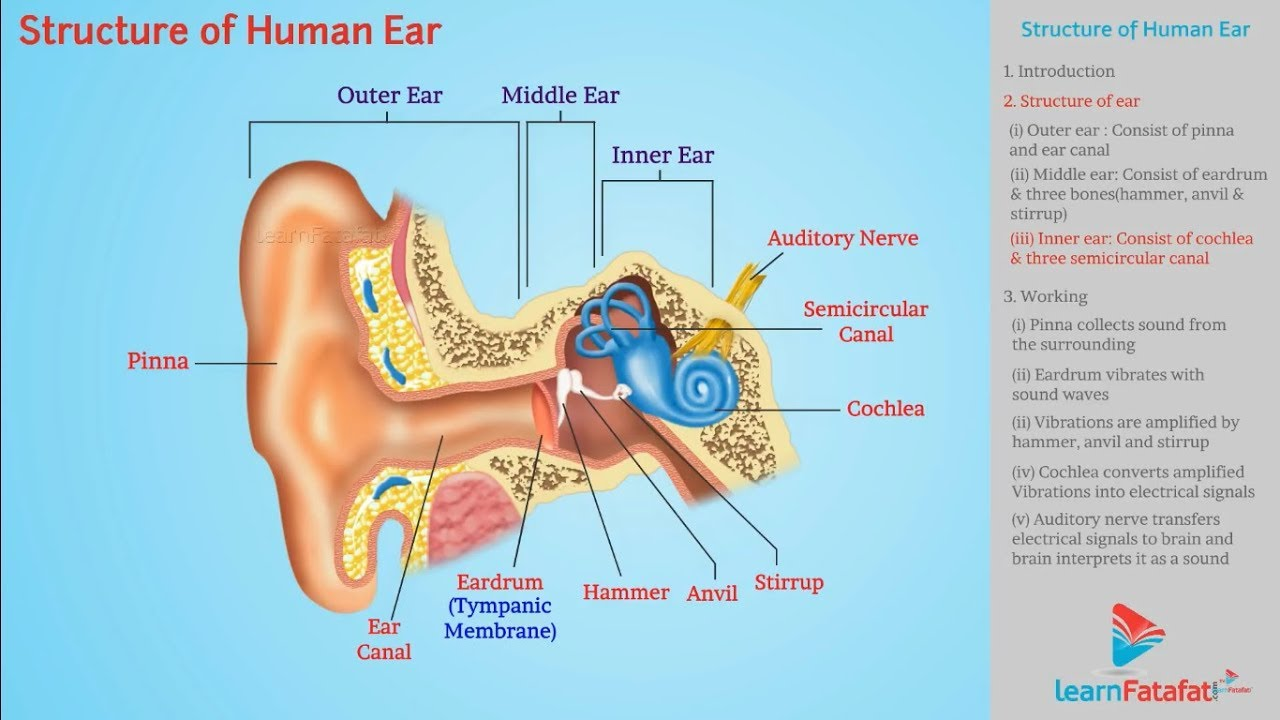 sound class 9 science structure of human ear [ 1280 x 720 Pixel ]