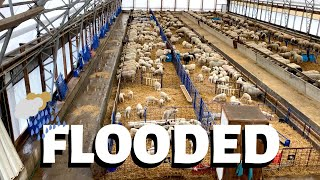 the-sheep-barn-flooded-twice-vlog-218