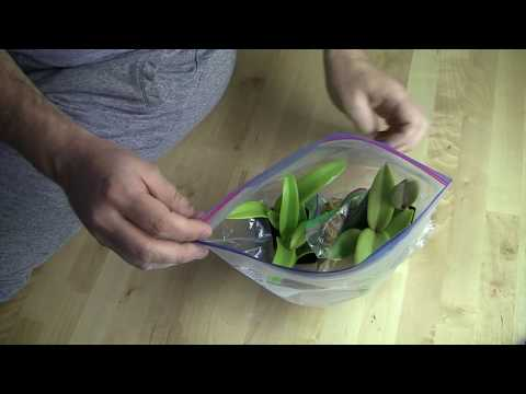 How I Make Orchid Roots Grow