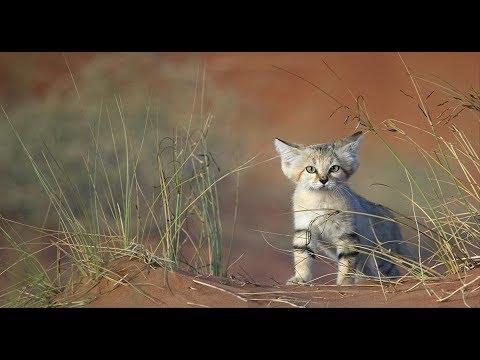 Дикие животные Ирана 2019 HD(National Geographic)