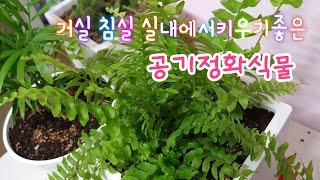 [환희사랑VLOG]거실 침실에 키우기좋은 공기정화식물(…