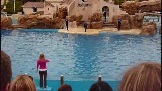 Dolphin Show at Sea World San Diego