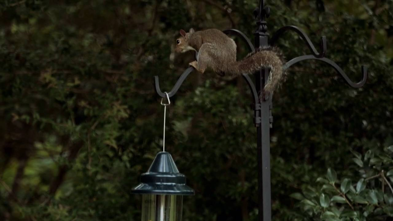 buster brome squirrel seller best com zoom plus bird duncraft feeder proof
