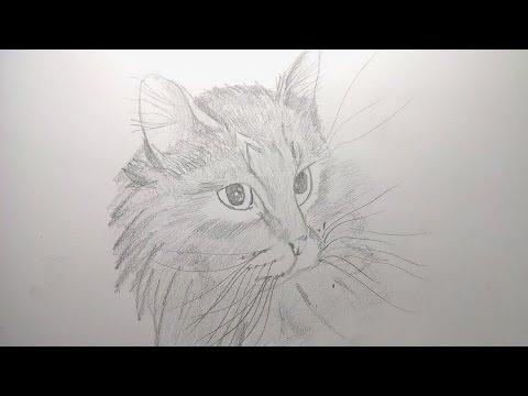 Como Dibujar Un Gato Paso A Paso Realista Facil A Lápiz