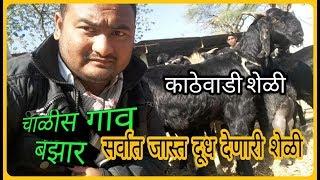 चाळीसगाव बाजार काठेवाडी शेळी |  goatfarming Kathewadi Challis gaav bazzar