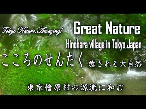 Hynobiidae's eye Tokyo Nature,Amazing! Great Nature Hinohara village in Tokyo,サンショウウオ視線 東京檜原村源流